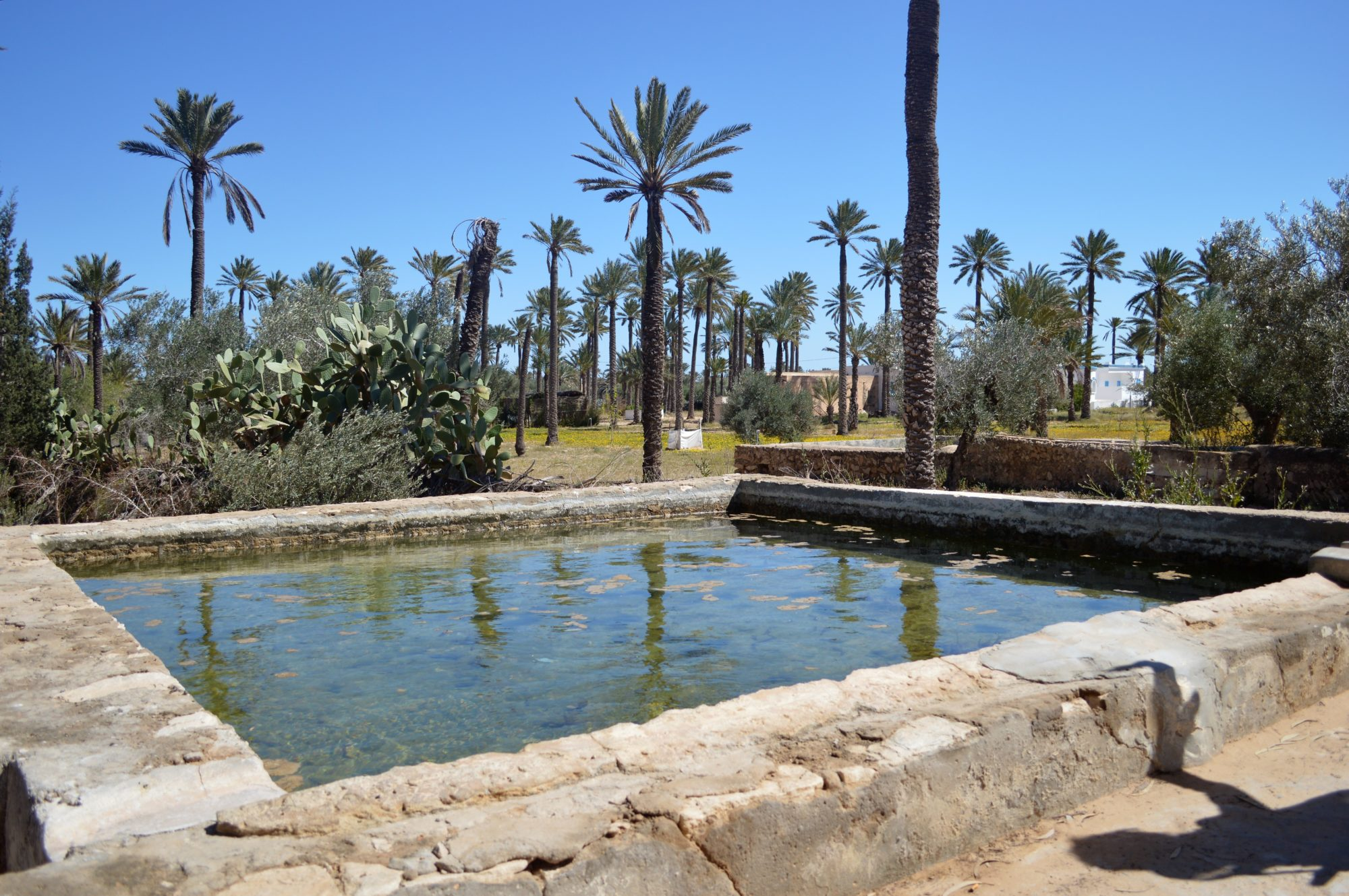 water-well-eau-douce-puits-djerba