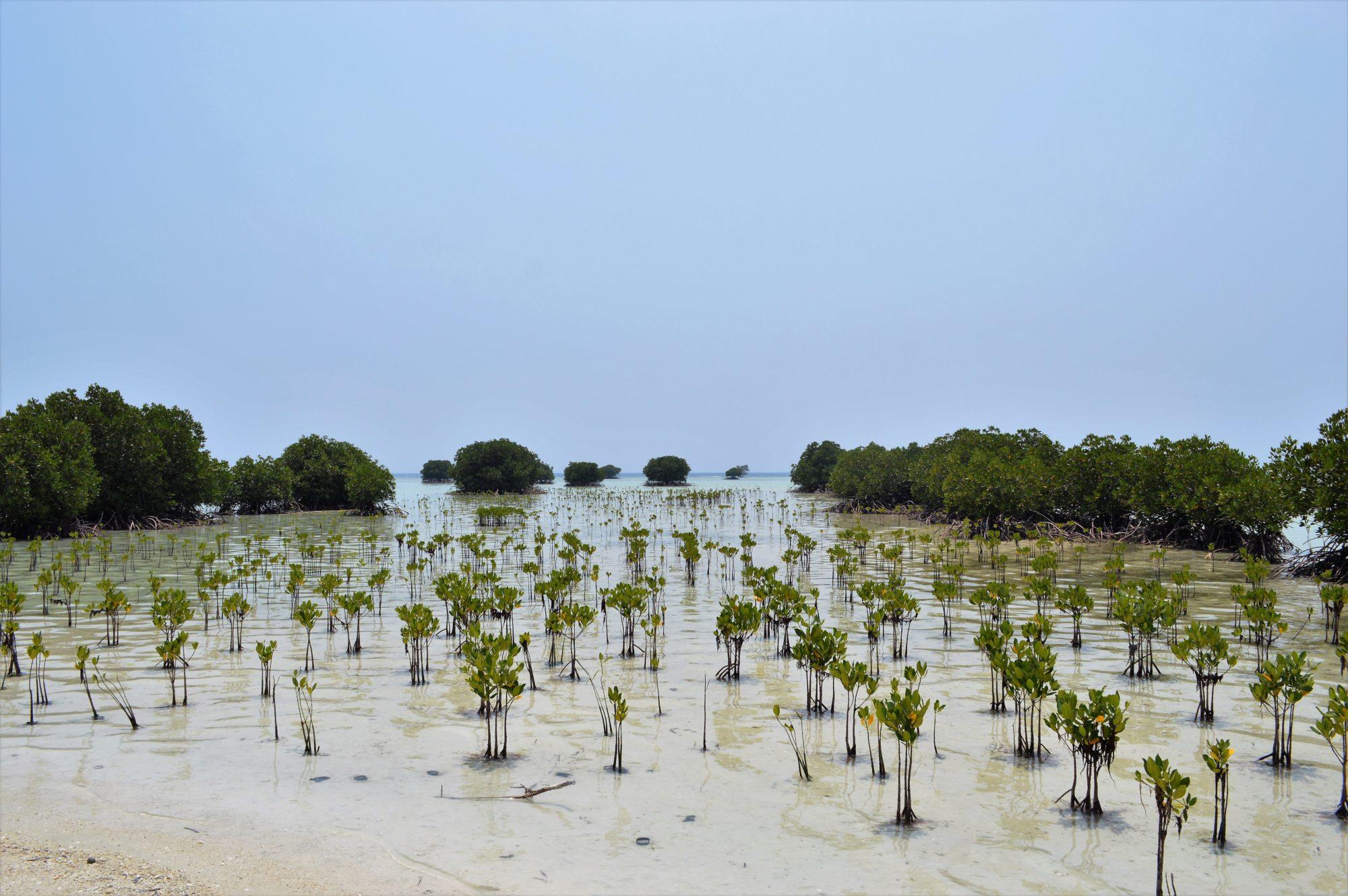 pulau-pari-pantai-pasir-perawan-5